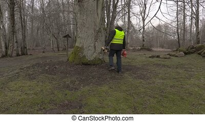 Worker with chainsaw walking around big tree in park