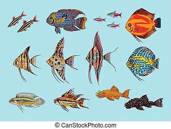 Beautiful Aquarium Fishes Collection - Beautiful aquarium...