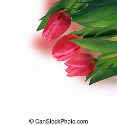 Spring holiday red tulip. - Spring holiday red tulip flowers...
