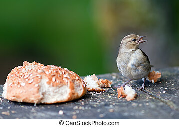 Bird with a bread roll - bird with a bread roll on a table