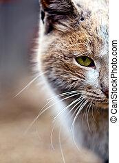 kedvenc, állat, Macska