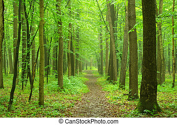 forest - a path is in the green forest...