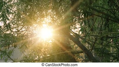 Tree in park with sunrise on background, warm color with...