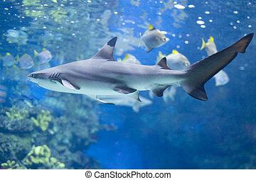 Big shark in water - country Spain - Barcelona Aquarium...