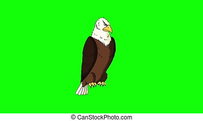 Bald Eagle Sits and Looks Around - Animated Motion Graphic...
