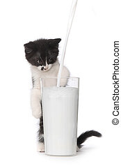 Cute Kitten Watching Milk Pour Into a Glass - Adorable...