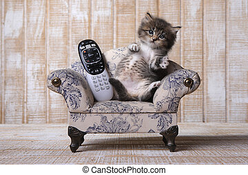 Adorable Kitten Relaxing on Couch With Remote - Funny...