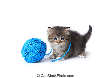 Kitten With Ball of Yarn in Studio - Adorable Kitten With...