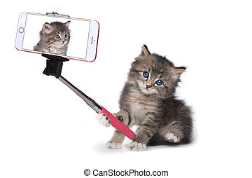 Kitten Taking His Own Photo With Selfie Stick - Funny Kitten...