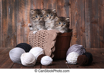 Kittens With Balls of Yarn in Studio - Adorable Kittens in a...