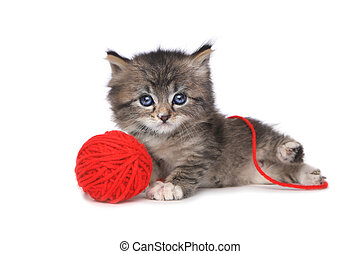 Playful Kitten With Red Ball of Yarn - Cute Kitten With Red...