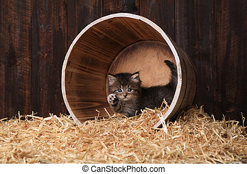 Cute Adorable Kittens in a Barn Setting With Hay - Adorable...