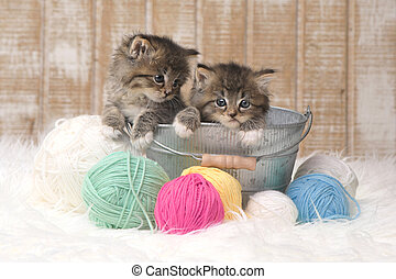 Kittens With Balls of Yarn in Studio - Adorable Kittens With...