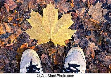 Autumn season in sneakers - Autumn season in hipster style...