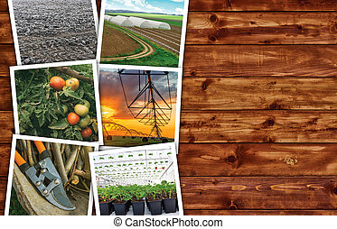 Agriculture photo collage on wooden background as copy space