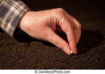 solo, mão, feijões, femininas, Soja, semeando, chão