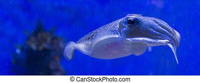 Spear squid close up photo