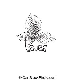 hand drawn leaves - vector illustration of hand drawn leaves...