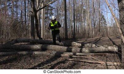 Lumberjack checking fallen trees in park