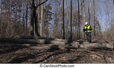 Lumberjack reading near fallen trees in park