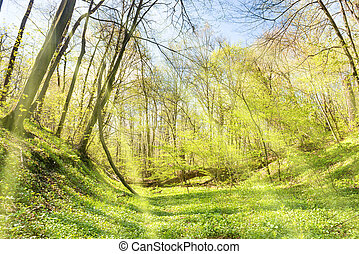 Green grass on a meadow in spring forest with new leaves on...