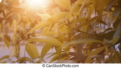 Green leaves and sunset light on background