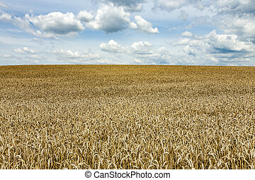 white clouds over field