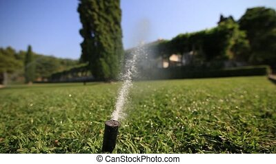 Automatic lawn watering. Sprayer of grass. Green lawn at...
