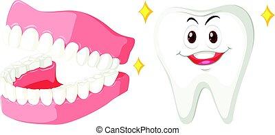 Clean teeth of human