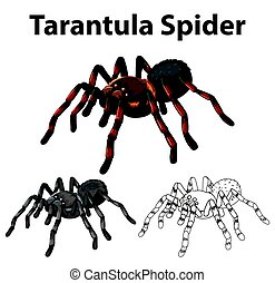 Doodle character for tarantula spider illustration