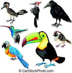 Different types of wild birds illustration