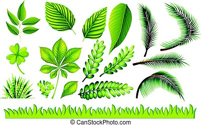 Different types of green leaves and grass