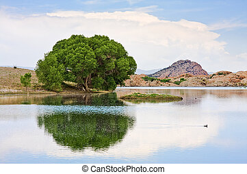 Cottonwood Tree and Lake - An old cottonwood tree at the...