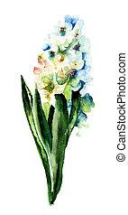 Blue hyacinth blooming flowers, Watercolor painting