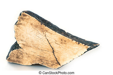 polished fossil mammoth tusk