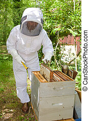Beekeeper tending hive