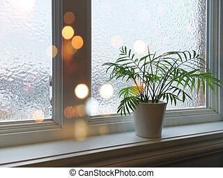 Frosted window, green plant and lights