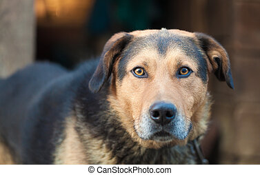 Large guard dog with expressive eyes staring in disbelief....