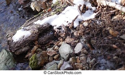 Stream in the mountains, in the snow. Spring with clear mountain