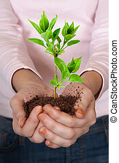 Green plant in hands