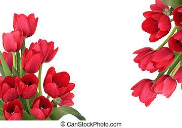 紅色, 郁金香, 花, 邊框