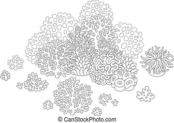 Corals - Black and white vector illustration of corals and a...