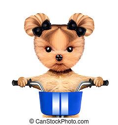 panier,  adorable,  doggy, Vélo, séance