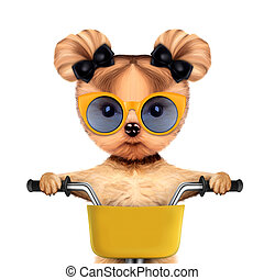 Funny racer dog with bicycle. Sport concept - Funny racer...