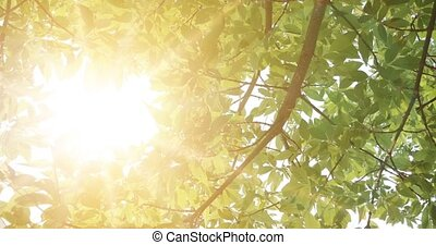 A birch leaves against the sun. Green leaves vintage grading effect.