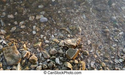 River bank close-up. Stones, shells, snails, reeds on river...