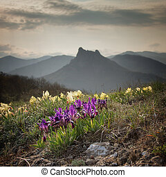 Wild flowers irises against the backdrop of mountain peaks.