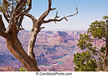 Grand Canyon and Juniper Trees - A majestic view of the...
