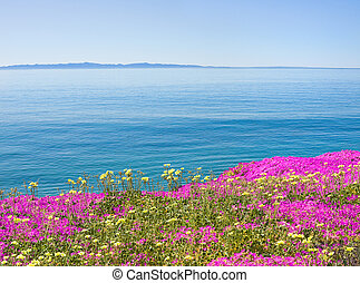 Island and Flowers - The Santa Barbara channel with purple...
