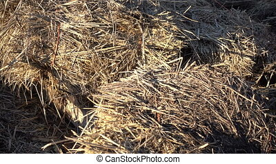 Detail of pile of straw in an organic farm, ready to be used...